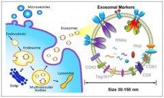 Cnkingbio Exosome抽提及电镜鉴定正式上线啦!